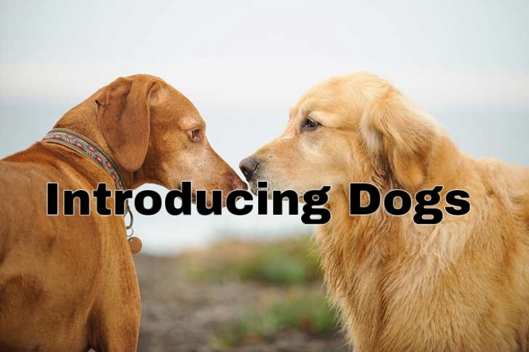 Introducing Dogs to Each Other
