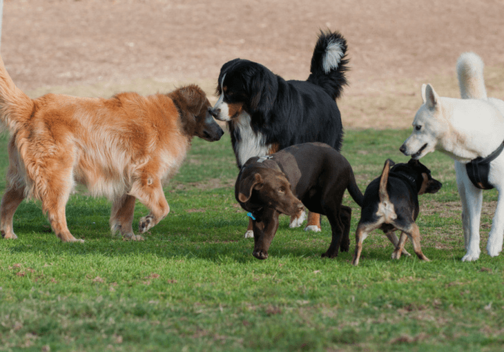 Well-Mannered Dog: Training, Play, Socialization