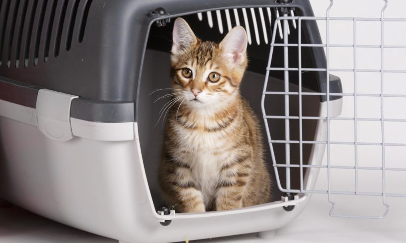 Cat Crate Training Instructions and Tips