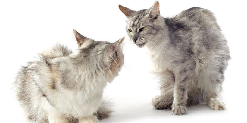 Cat Behavior Modification and Counter-Conditioning