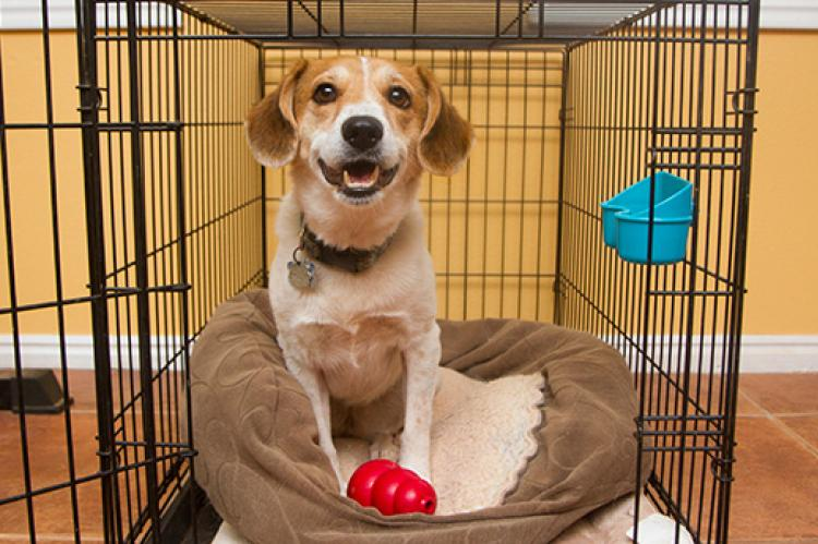 The Benefits of Crate Training