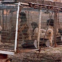 Puppy Mills: Tough Life for Dogs