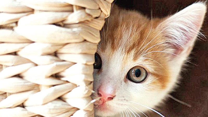 Shy Dogs and Cats: How to Help Timid Pets