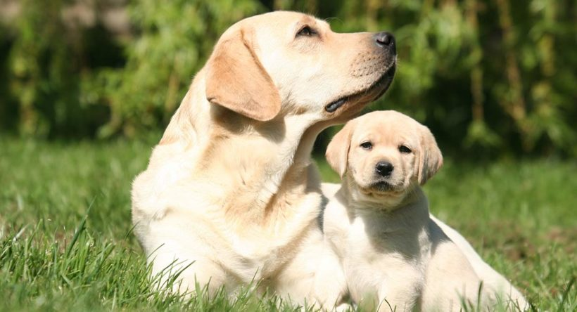 Choosing a Pet: Puppies and Dogs