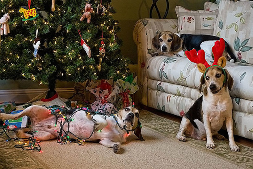 Christmas Holiday Dangers for Pets