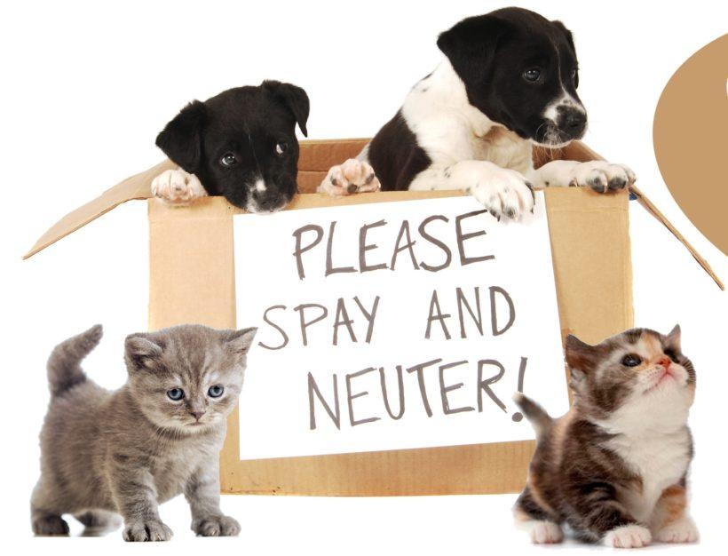 Understanding Spay and Neuter