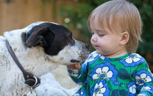 Dog Bites Child: How to Prevent this Scenario
