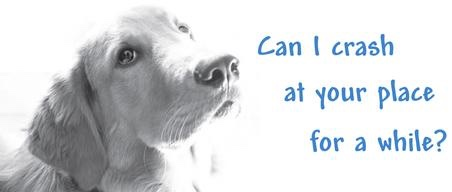 Pet Fostering Q&A
