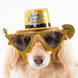 10 New Years Resolutions for Dog People