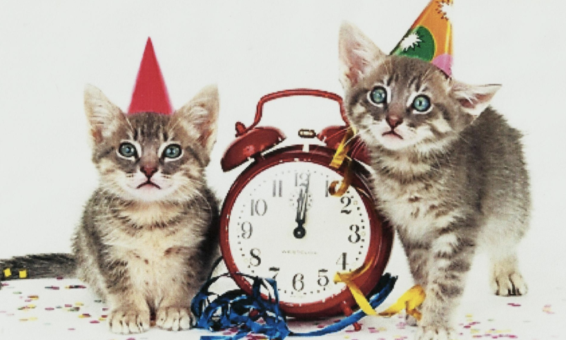 10 New Year's Resolutions Cats Make