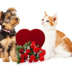 5 Tips for Pet Safety on Valentine's Day