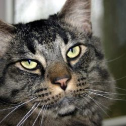 Diabetes in Cats: Types, Treatments and Prognosis