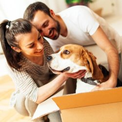 Moving with Cats or Dogs