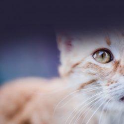 FeLV Cats: FAQ