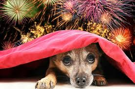 Fireworks and Dogs, Cats and Other Pets